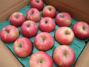 画像1: 葉とらずりんごサンふじ秀10キロ箱