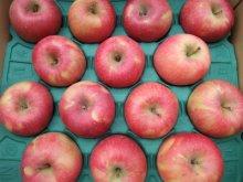 他の写真1: 葉とらずりんごサンふじ秀5キロ箱