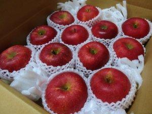 画像1: 葉とらずりんごサンふじ特選10キロ箱