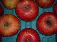 他の写真1: 葉とらずりんごサンふじお徳用10キロ箱