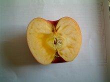 他の写真1: 葉とらずりんご サンふじ特選5キロ箱