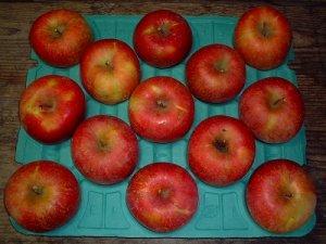 画像1: 葉とらずりんごサンふじお徳用10キロ箱